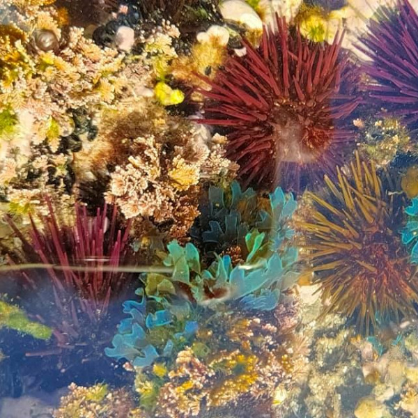 Ecologia entre marés - Módulo II
